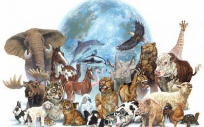 29 de Abril, Día del Animal