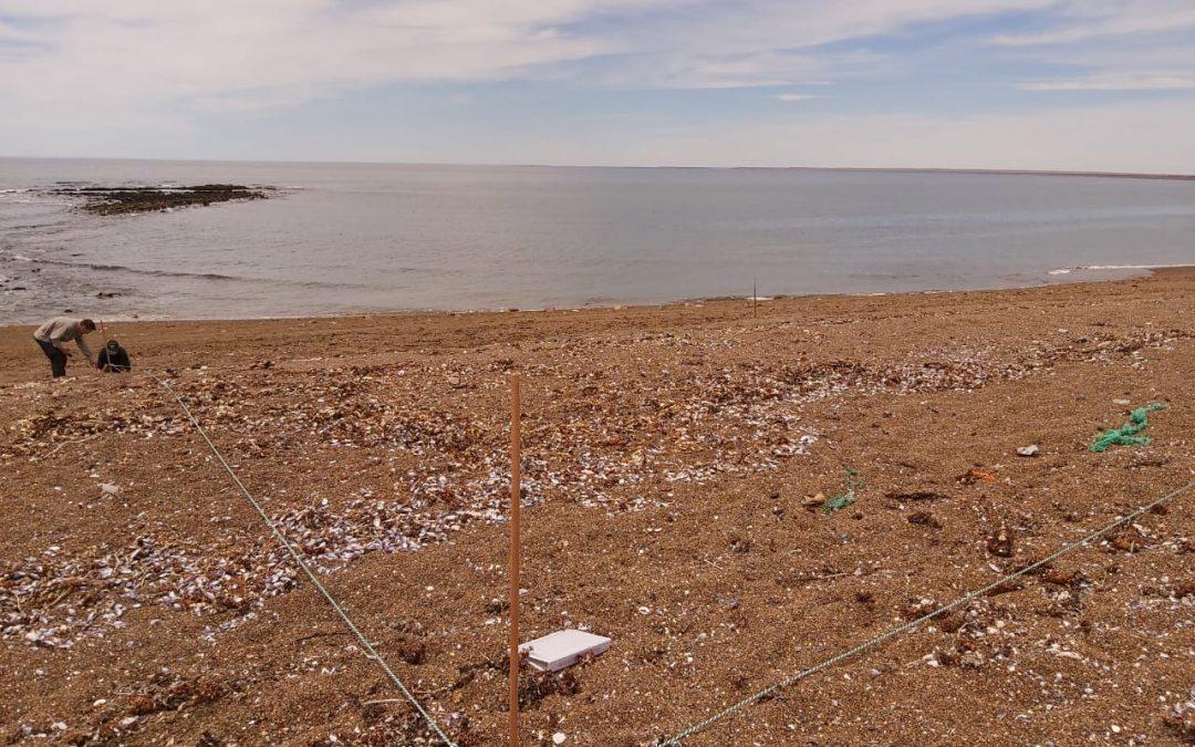 Se dio inicio al Plan Provincial de Limpieza y Censo de Residuos Costeros en el litoral marítimo