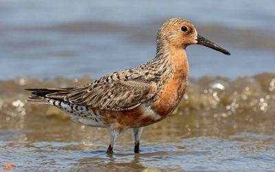 8 de mayo – Día mundial de las Aves Migratorias