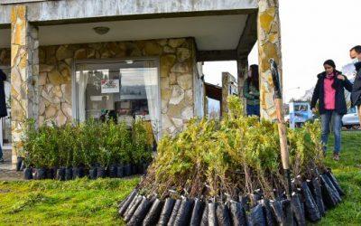 Comenzó en El Hoyo el plan para reforestar las áreas afectadas por los incendios